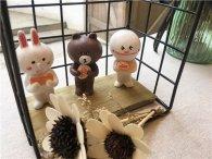 火爆LINE的可妮兔和布朗熊,蜡艺生活馆的分享